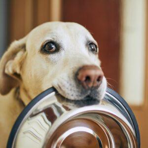 L'alimentazione del tuo cane: un aspetto da non sottovalutare.